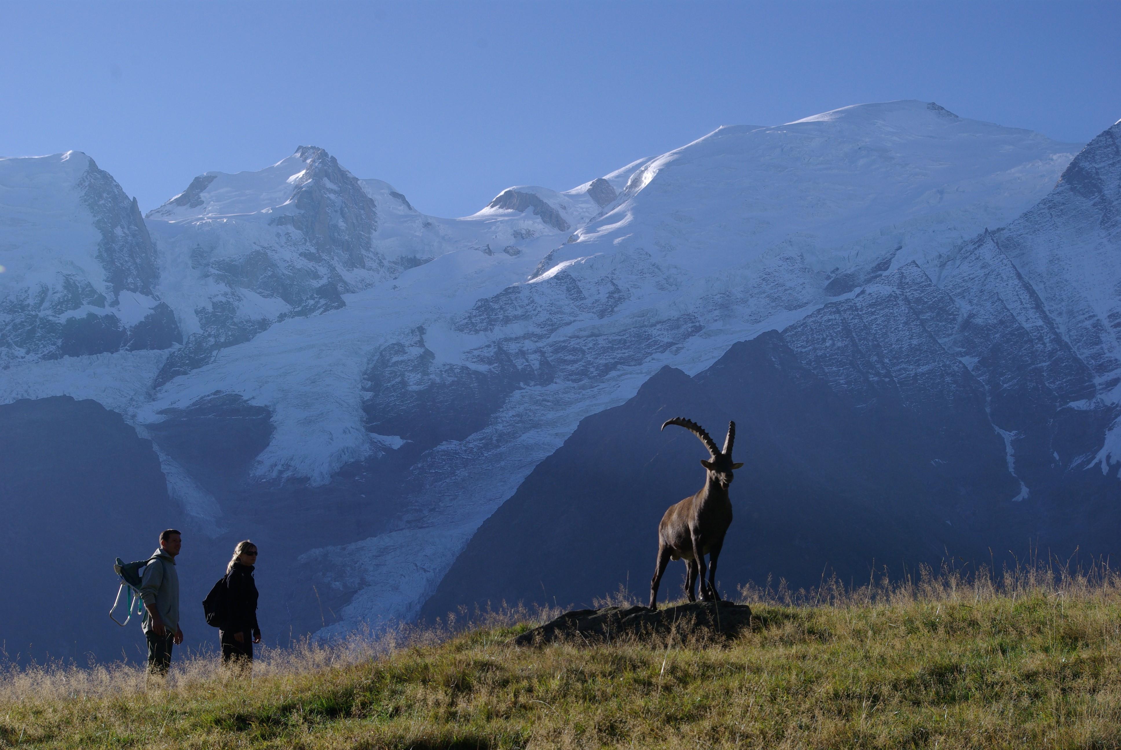 Nouvelles printanières de la Vallée de Chamonix MERLET_ANIMAL_PARK_Chamonix_1